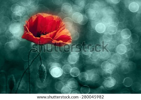 Abstract nature - red poppy flower with light bubbles in the background - stock photo