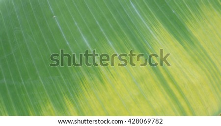 abstract of banana leave design by natural on trunk - stock photo