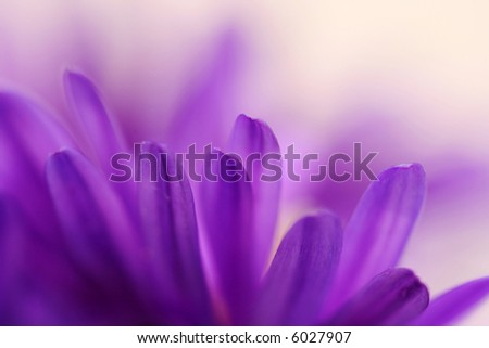 Abstract of blue petals of aster - depth of field - stock photo