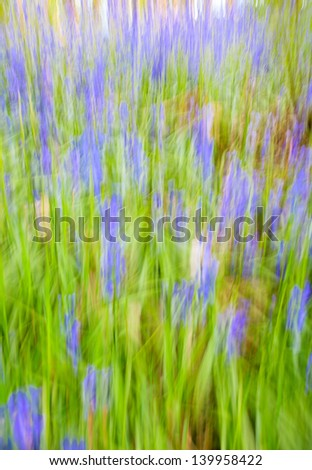 Abstract of bluebells in a wood