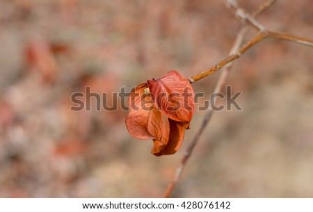 abstract of Dry leaves on the tree,brown leaves on trunk,two leaves on branch - stock photo
