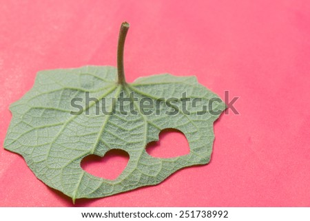 Abstract of leaf in heart shaped