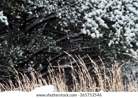 Abstract of Red Fescue on a cold winter day with extreme shallow depth of field. - stock photo