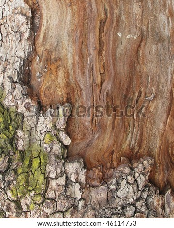 Abstract old plane trunk - stock photo