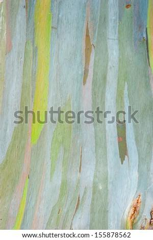 Abstract painting by eucalyptus tree bark - stock photo
