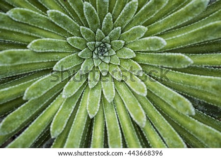 Abstract pattern of the leaves of a green succulent plant - stock photo