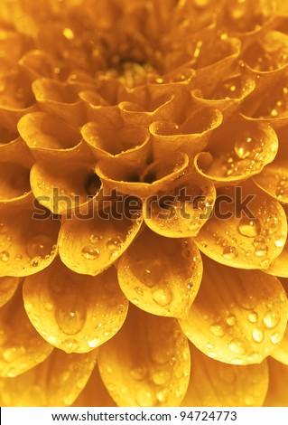 Abstract petals - stock photo