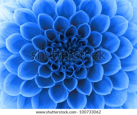 Abstract petals of a flower - stock photo