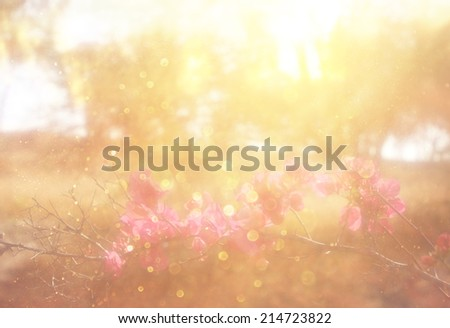 abstract photo of light burst among trees and flowers. dreamy concept with blur  bokeh lights - stock photo