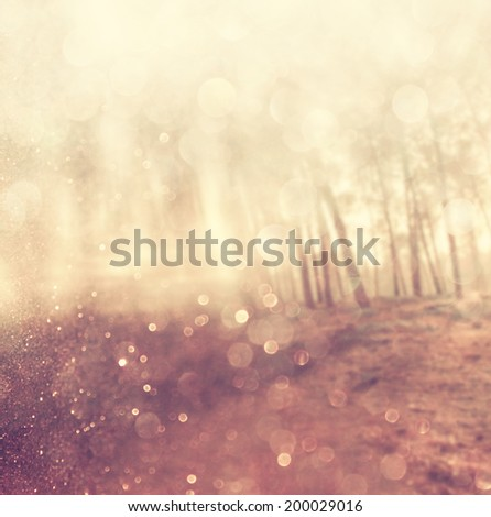 abstract photo of light burst among trees and glitter bokeh lights. filtered image and textured. - stock photo