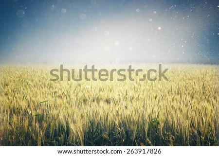 abstract photo of wheat field and bright sky . instagram effect.  - stock photo