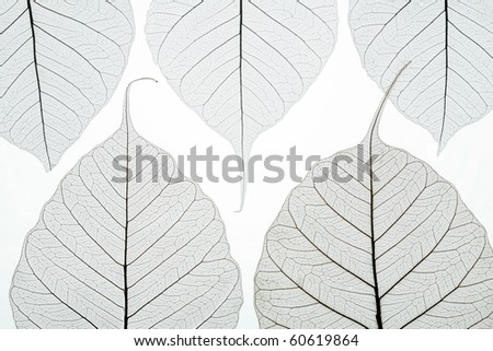 Abstract picture with autumn leaves