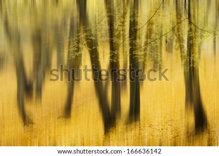 Abstract piece of art, motion photography  of an autumn forrest foliage, detail - stock photo
