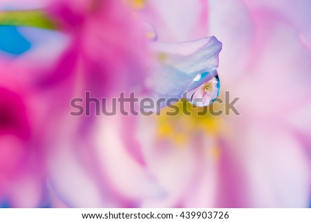 Abstract pink  floral macro background with waterdrop reflection - stock photo