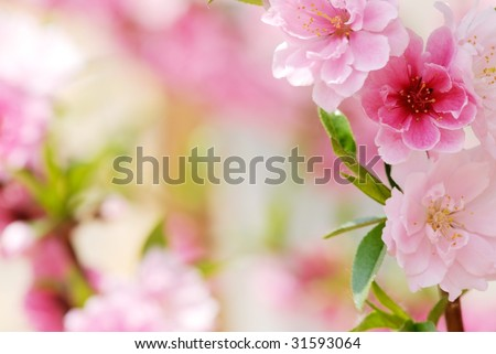 Abstract Pink Flower Background - stock photo