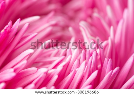 Abstract pink Flower background Macro photography. close up  - stock photo