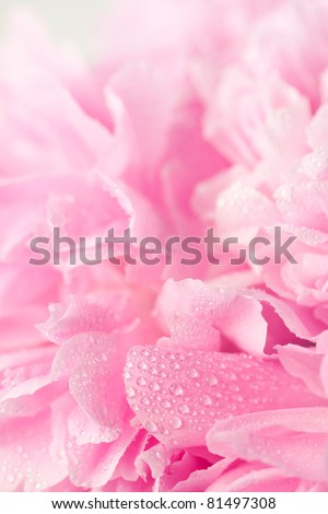 Abstract pink peony flower background - stock photo