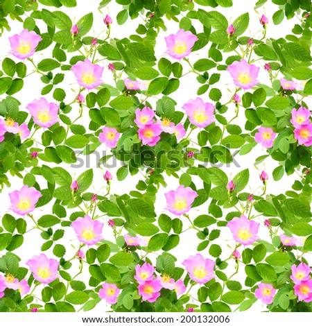 Abstract seamless pattern with pink flowers, buds and green leafs of dog-rose. Isolated on white background. Close-up. Studio photography. - stock photo