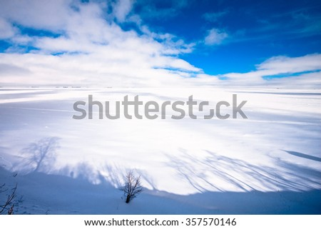 Abstract shadows of trees on the edge of high cliff above the Gulf of Finland covered by thick ice and snow near St. Petersburg, Russia