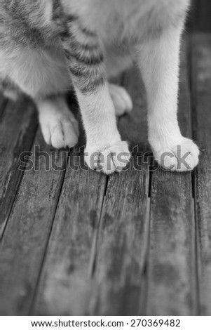 Abstract shot of furry feet of a cat against a wooden background. - stock photo