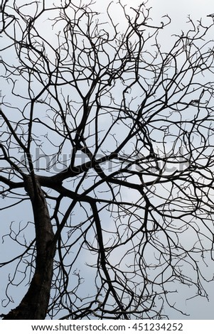 abstract Silhouette Autumnal tree branch