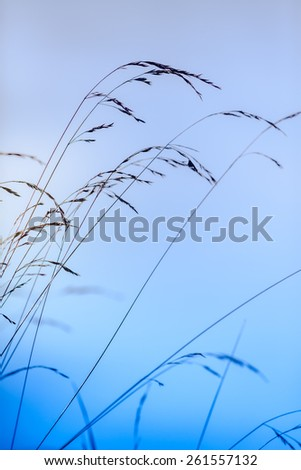 Abstract silhouettes of  dry grass against sky - stock photo