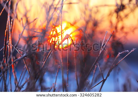 abstract silhouettes of plants in the frost at sunset. blurred image - stock photo