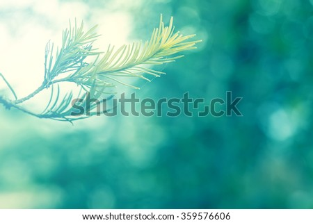 abstract soft focus of part of tree with cool blue lighting softness  background - stock photo