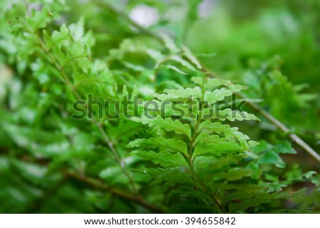 abstract soft green backgroundof vegetation - stock photo
