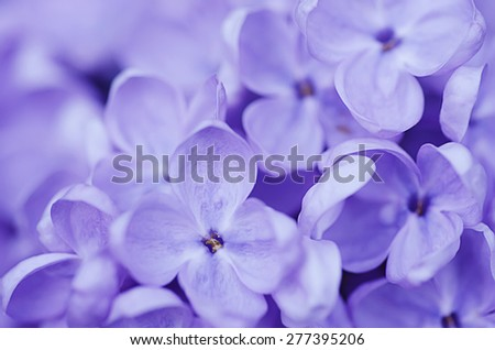 Abstract soft pastel tender floral natural background from lilac flowers