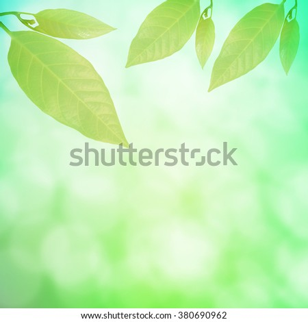 Abstract spring  season  green bokeh and leaves background
