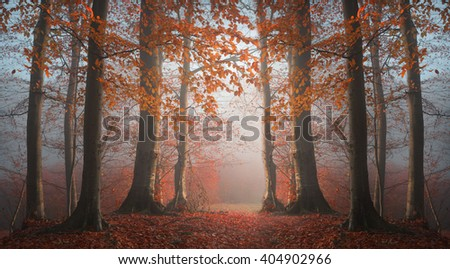 Abstract symmetry in foggy forest - stock photo