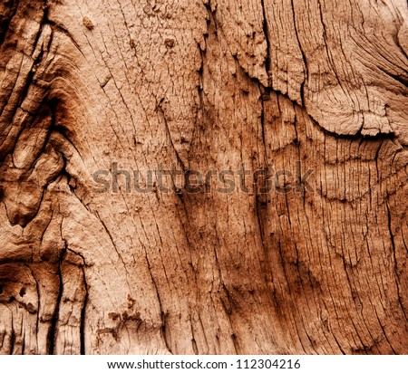 Abstract texture of dry and old wood surface