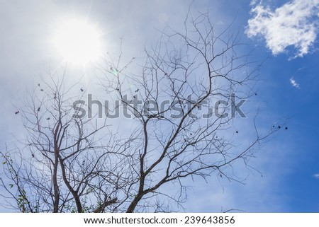 Abstract tree branches isolated on sky background used as a background for a comparison of the difference. - stock photo