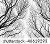 abstract tree canopy background - stock photo