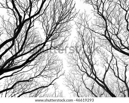 abstract tree canopy background