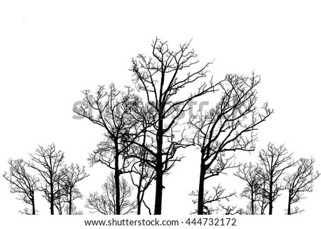 abstract tree isolated on white.