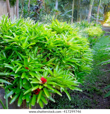 Abstract Tropical Landscaping Bromeliad Planting Vignette - stock photo
