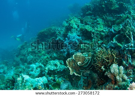 Abstract underwater scene, coral reef. - stock photo