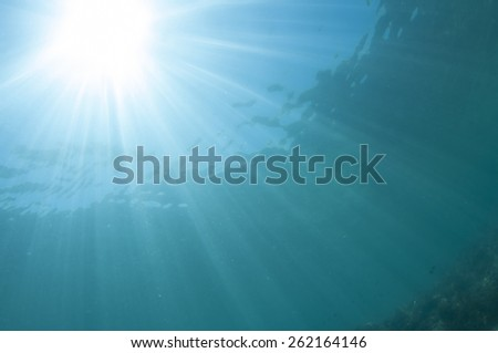 Abstract underwater scene, Coron , Palawan, Philippines. - stock photo