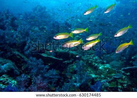 Abstract underwater school fish background stock photo royalty free abstract underwater school fish background freerunsca Gallery