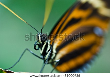 Abstract up close butterfly posing for the camera - stock photo