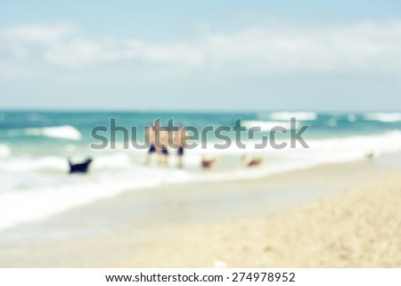 Abstract view of people playing with dogs on the beach - stock photo