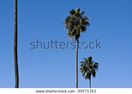 Abstract View of Three Palm Trees - stock photo