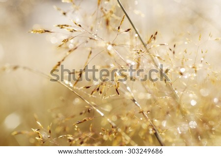 Abstract vintage blurred soft hipster background of grass with shiny dew water drops - stock photo