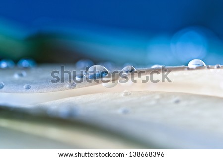 Abstract water drop on flower fresh color - stock photo