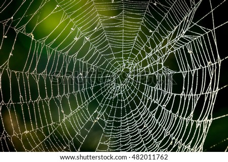 abstract web in morning forest