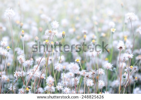 Abstract white flowers blurred in outdoors - stock photo