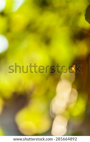 Abstract yellow and green background - summer season