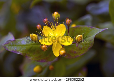 Abstract yellow flower closeup with soft focus and beautiful nature  - stock photo